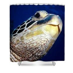 Turtles 1 Shower Curtain by Dawn Eshelman