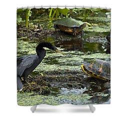 Turtles And Anhinga Shower Curtain