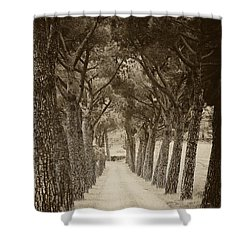 Shower Curtain featuring the photograph Tuscan Pines by Hugh Smith
