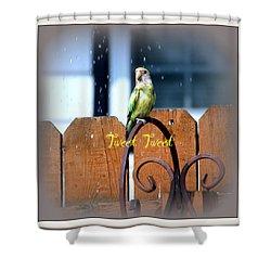Tweet Tweet Shower Curtain by Kay Novy