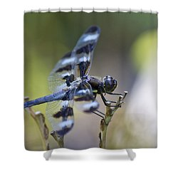 Twelve Spot Hanging Out Shower Curtain by Shelly Gunderson