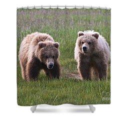 Twin Bear Cubs Shower Curtain