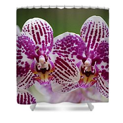 Shower Curtain featuring the photograph Twin Beauty by Blair Wainman