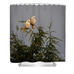 Twin Cockatoos Shower Curtain by Bev Conover