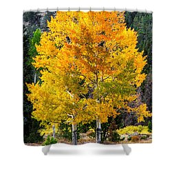 Twin Fall Trees Shower Curtain by Juli Ellen