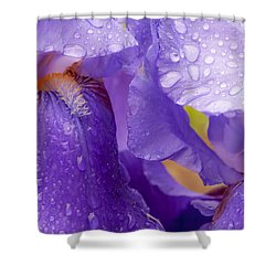 Shower Curtain featuring the photograph Twin Iris by Sabine Edrissi