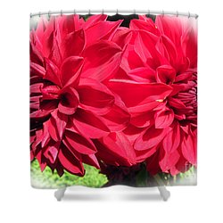 Shower Curtain featuring the photograph Twin Red Dahlias by Tina M Wenger