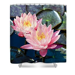 Two Pink Waterlilies Shower Curtain