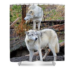 Shower Curtain featuring the photograph Twin Wolves by Athena Mckinzie