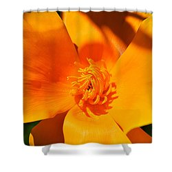 Twisted And Shadows Shower Curtain by Felicia Tica