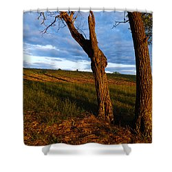 Twisted Tree Shower Curtain by Nick Kirby