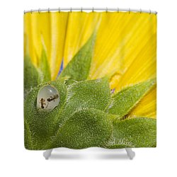 Two Ants Entombed In Sunflower Resin Shower Curtain