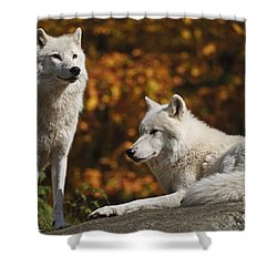 Shower Curtain featuring the photograph Two Arctic Wolves On Rock Hill by Wolves Only