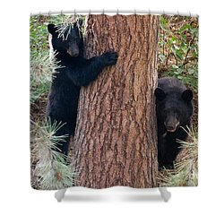 Two Bears Shower Curtain