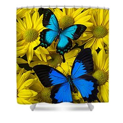 Two Blue Butterflies Shower Curtain by Garry Gay