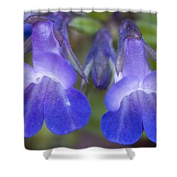 Shower Curtain featuring the photograph Two Blue by Sonya Lang