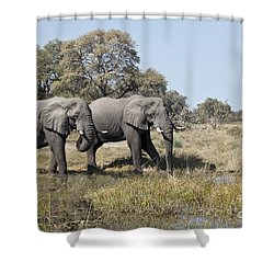 Two Bull African Elephants - Okavango Delta Shower Curtain by Liz Leyden
