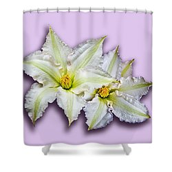 Two Clematis Flowers On Pale Purple Shower Curtain by Jane McIlroy