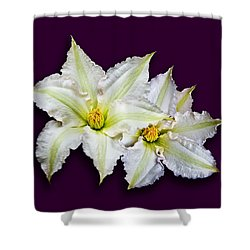 Two Clematis Flowers On Purple Shower Curtain by Jane McIlroy