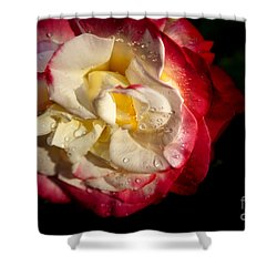 Shower Curtain featuring the photograph Two Color Rose by David Millenheft