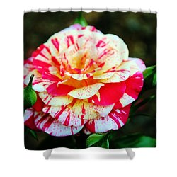 Two Colored Rose Shower Curtain by Cynthia Guinn