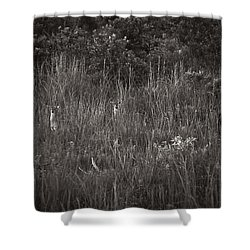 Two Deer Hiding Shower Curtain by Bradley R Youngberg