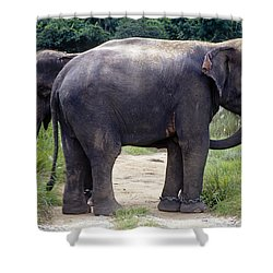 Two Elephants Shower Curtain