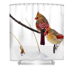 Two Females Posing As Cardinals Shower Curtain by Randall Branham