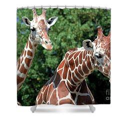 Two Giraffes Shower Curtain by Kathleen Struckle