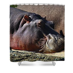 Two Hippos Sleeping On Riverbank Shower Curtain by Johan Swanepoel
