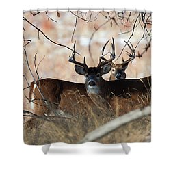 Shower Curtain featuring the photograph Two In The Bush by Jim Garrison