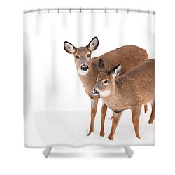 Two In The Snow Shower Curtain by Karol Livote