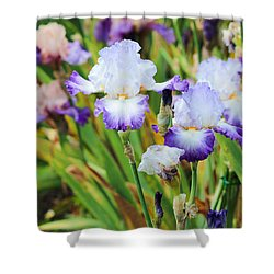 Shower Curtain featuring the photograph Two Iris by Patricia Babbitt