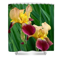 Two Iris Shower Curtain by Rodney Lee Williams