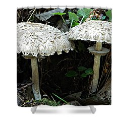 Two Magnificent Toadstools Shower Curtain