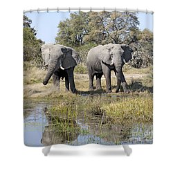 Shower Curtain featuring the photograph Two Male Elephants Okavango Delta by Liz Leyden