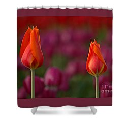 Shower Curtain featuring the photograph Two Of A Kind by Nick  Boren