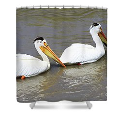 Shower Curtain featuring the photograph Two Pelicans by Alyce Taylor