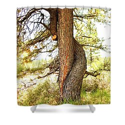 Two Pines Intertwined  Shower Curtain