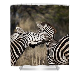 Shower Curtain featuring the photograph Two Plains Zebra Botswana by Liz Leyden