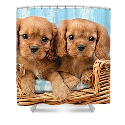 Two Puppies In Woven Basket Dp709 Shower Curtain by Greg Cuddiford