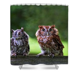 Two Screech Owls Shower Curtain