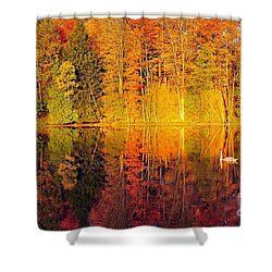 Two Swans A Swimming Shower Curtain