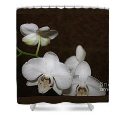 Shower Curtain featuring the photograph Two To Bloom by Cathy Dee Janes