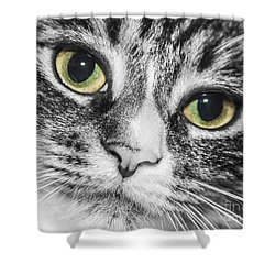 Two Toned Cat Eyes Shower Curtain by Jeannette Hunt