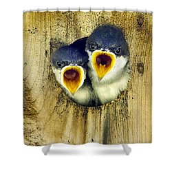 Two Tree Swallow Chicks Shower Curtain by Christina Rollo