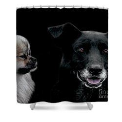 Two Types Of Mutts Shower Curtain by Nola Lee Kelsey