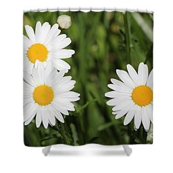 Shower Curtain featuring the photograph Two Up One Across by Anita Oakley