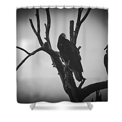 Two Vultures Shower Curtain by Bradley R Youngberg