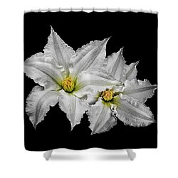 Two White Clematis Flowers On Black Shower Curtain by Jane McIlroy